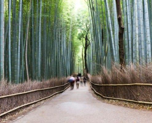 Teach English in Kyoto Japan
